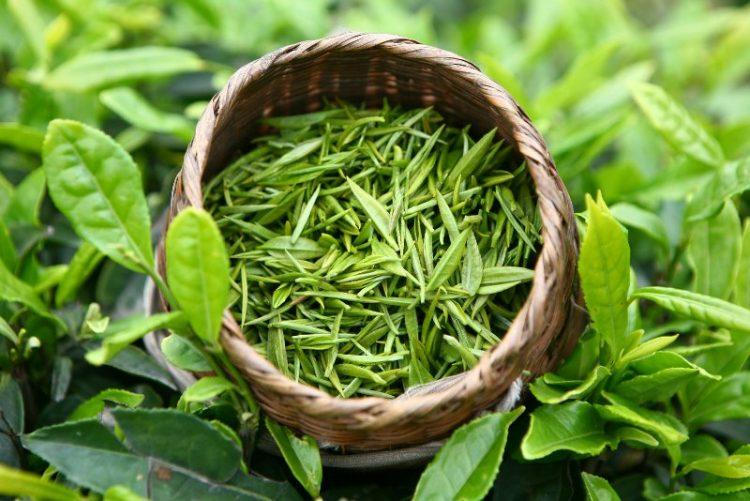 Зеленый чай от прыщей